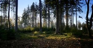 великий лес в медовом месяце