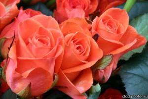 Количество цветов,букет