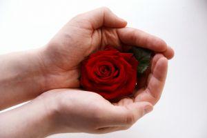 желание роза