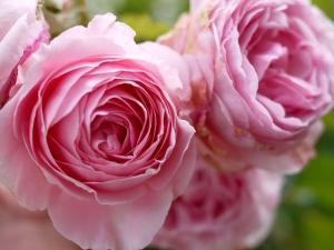 Цветы жены